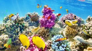 El calentamiento del mar mata a las esponjas del Mediterráneo oriental