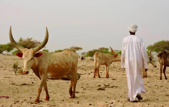 Mueren 12 personas en enfrentamientos entre agricultores y pastores en Chad