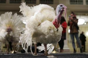 Hallan cepa de gripe aviar en una granja de pavos del norte de Inglaterra