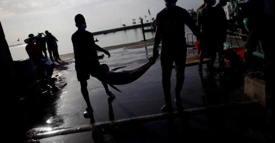WWF pide a Gobierno de Ecuador acciones decisivas a favor de poblaciones atún