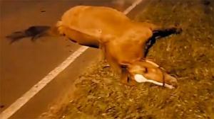 Hombre de 24 años muere al chocar contra un caballo