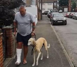 Bill, el perro que cojea por solidaridad con su dueño