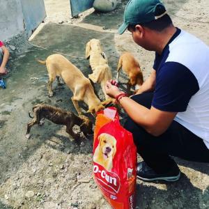 En La Concordia, archivan proyecto de ordenanza de tenencia de mascotas
